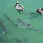 Tarpon Robbies Florida Keys - Travelammo