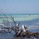Drift wood Bahia Honda Beach - Travelammo