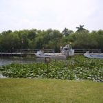 Airboat Safari Florida - Travelammo